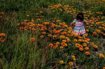 AlainaNunezPhotography.FlowerField.3-16-17-44