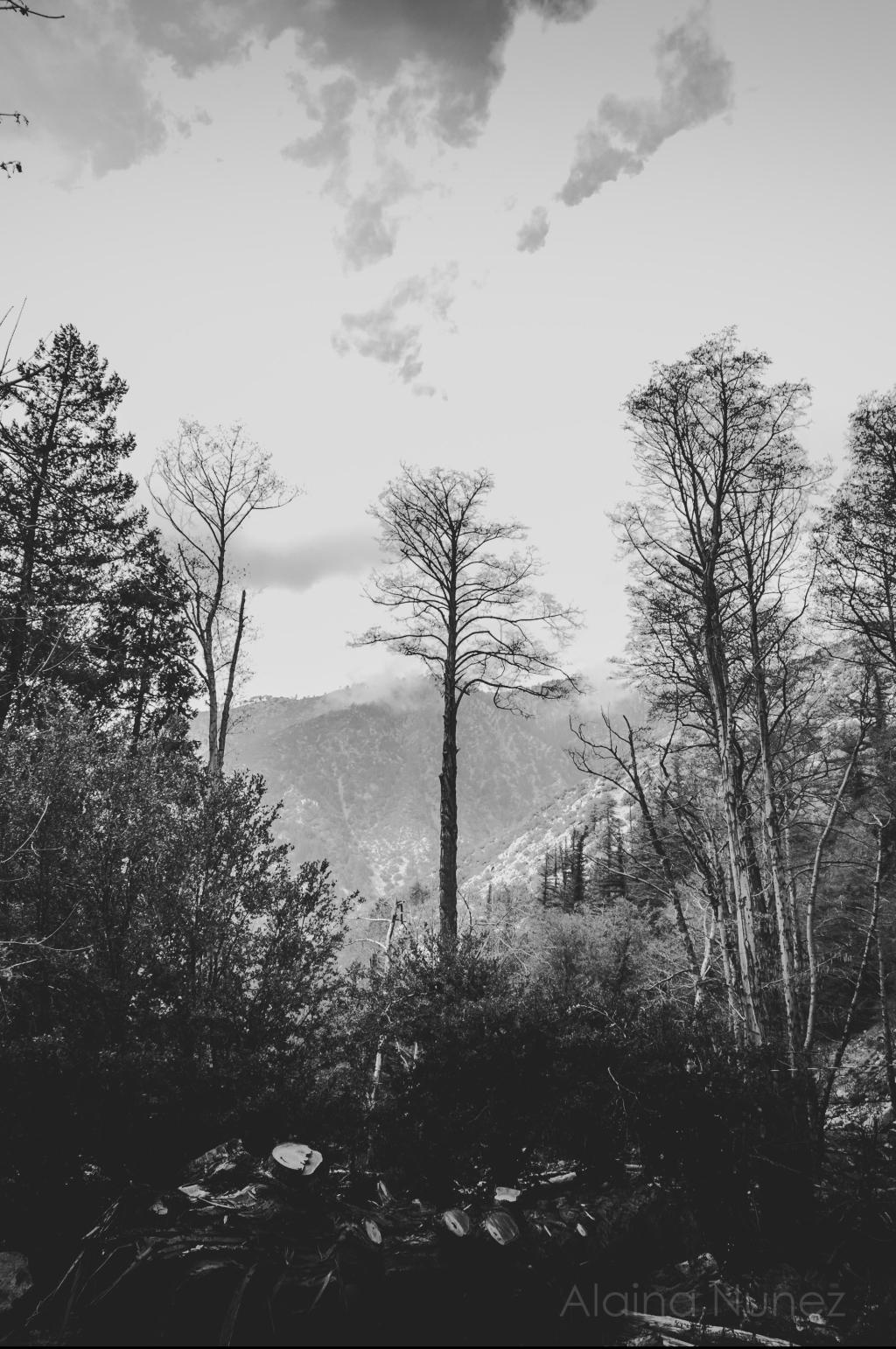 AlainaNunezPhotography.Week3-93
